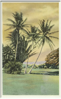 Palm trees on a grassy field in Hawai'i